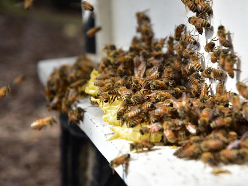 小蜜蜂教室06